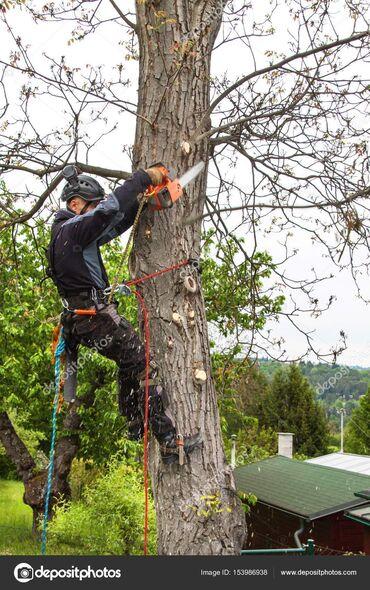 ствол грецкого ореха в Кыргызстан: Продаю дерево грецкого ореха под спил. Высота ствола 5 м, обЬём ствола