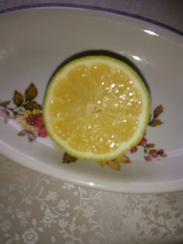 Продаю лимоны плодоносящие деревья в Лебединовка