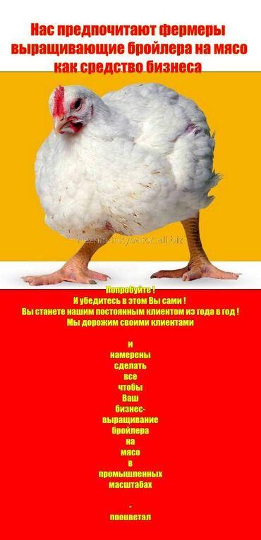 8909 объявлений: Спец корм для бройлера с высококачественным составом для   цыплят ин
