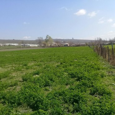 aaaf-parkda-satilan-evler-2018 в Азербайджан: Продам 175 соток Для сельского хозяйства от собственника