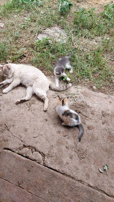 Животные - Кашка-Суу: Коты