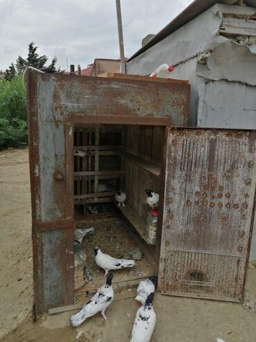 150 m2 ofislr - Azərbaycan: Sovetin qalin demirinnendi 150 nin 90 na real aliciya endirim ederem