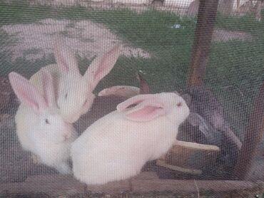 Личные вещи - Полтавка: Кролики разного возраста