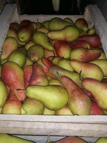 Талгарка. Продаю груши, Иссык-Кульские. В настоящее время находятся в