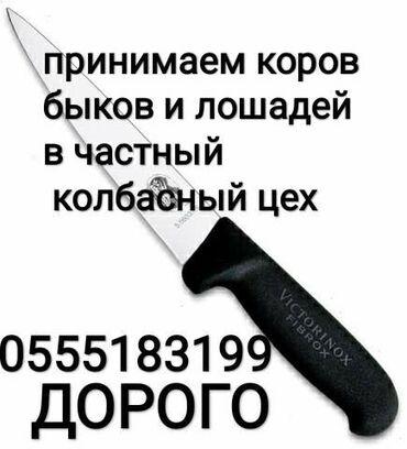 ксерокс купить в Кыргызстан: Куплю скот в колбасный цех дорого