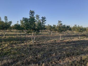 Недвижимость - Хачмаз: Продам 4800 соток Для сельского хозяйства от собственника