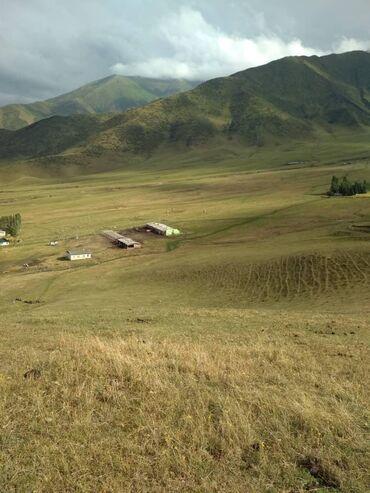 Продаю кашар в Ыссык-ате село Алмалуу.от Бишкека 35 км.сарай +дом 4
