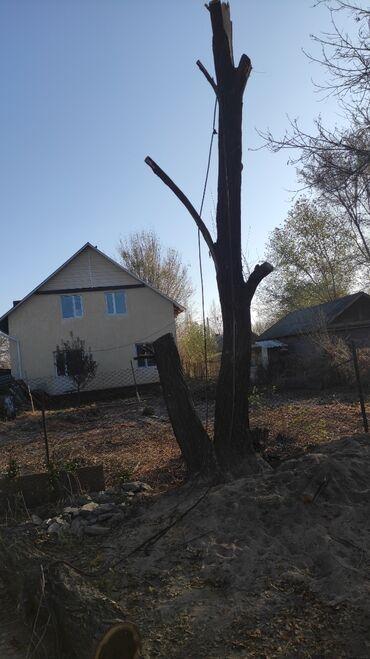 Пиломатериалы, фанера - Сокулук: | Листовые деревья