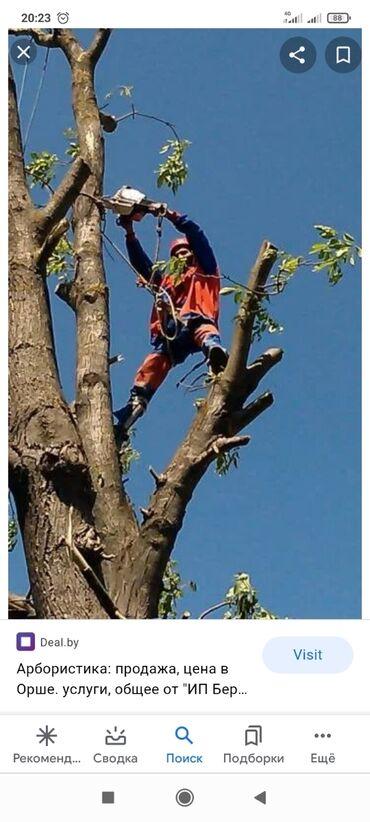 дрова бишкек in Кыргызстан | УГОЛЬ И ДРОВА: Пилим опасные сложные деревья дрова по взаимовыгодным ценам а также