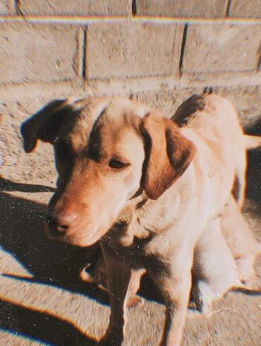 купить для собаки в Кыргызстан: Спешите купить себе домашнего питомца.Собака и ее щенята