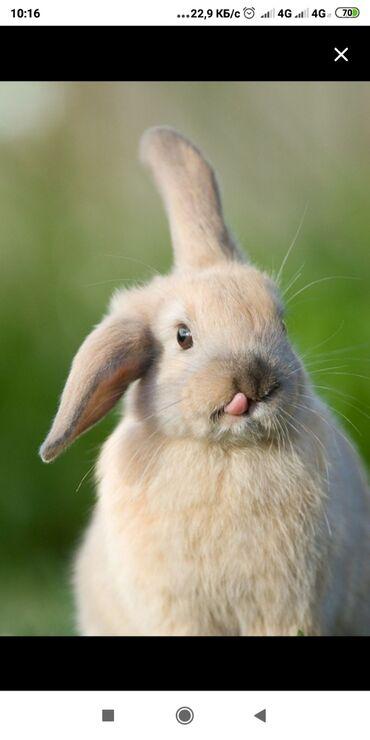 Зоопарк контактный для детей и взрослых в мик-не Асанбай 52 кролики р