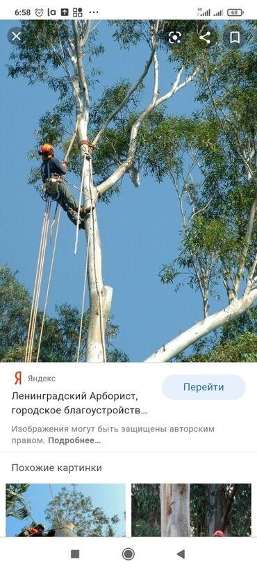 автовышка бишкек in Кыргызстан | ГРУЗОВЫЕ ПЕРЕВОЗКИ: Пилим очень сложные деревья при необходимости есть автовышка можем заб
