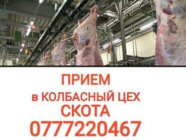 прием макулатуры бишкек адреса в Кыргызстан: Прием СКОТА: коров лошадей телок и бычков в КОЛБАСНЫЙ ЦЕХ