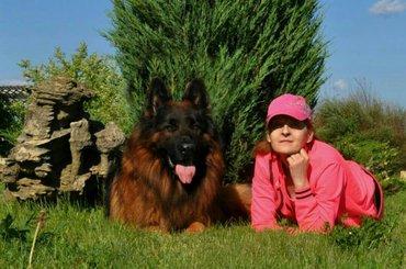 продаю высокопородных щенков немецкой овчарки. щенкам два месяца. в по в Бишкек