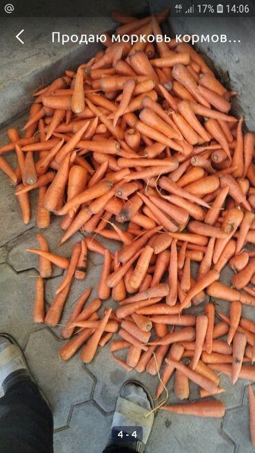 63 объявлений: Продаю морковь в количестве 20 тонн, цена за кг прям с поля.если