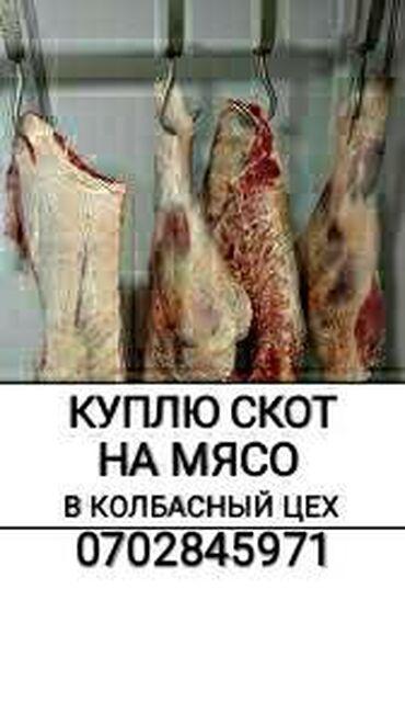 диски борбет а в Кыргызстан: А также вынужденный забой скота в колбасный цех в любое время суток и