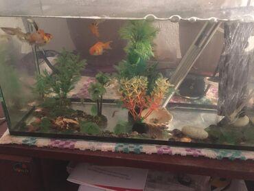 Продаю аквариум 20 литров с рыбками и со всеми принадлежностями