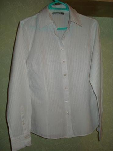 рубашка синего цвета в Кыргызстан: Рубашки и блузы Cat Orange L
