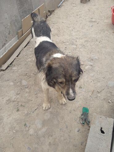 Животные - Тынчтык: Собаки