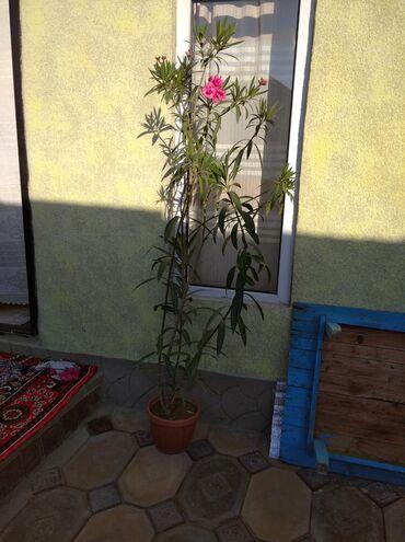 Другие комнатные растения