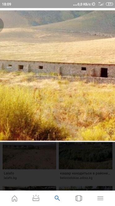 квартира сдаю бишкек в Кыргызстан: Сдаю в аренду кашара