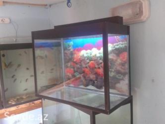 Bakı şəhərində Akvarium 50 litre