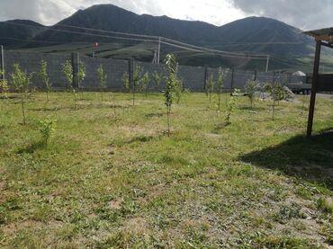 alfa romeo spider 2 mt в Кыргызстан: Продам Дом 40 кв. м, 2 комнаты