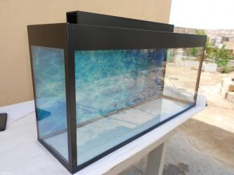 Bakı şəhərində Teze akvarium  bawqalarida var gelip yerinde sece bilersiz baliqlarda