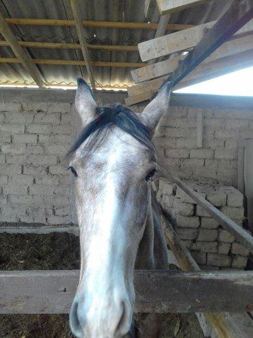 жазка кунан чыкма  в Кара-Балта