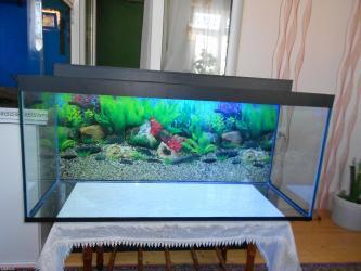 Bakı şəhərində Woook endirim 220 litrelik akvarium teze wuwenin qalinliqi 8mml