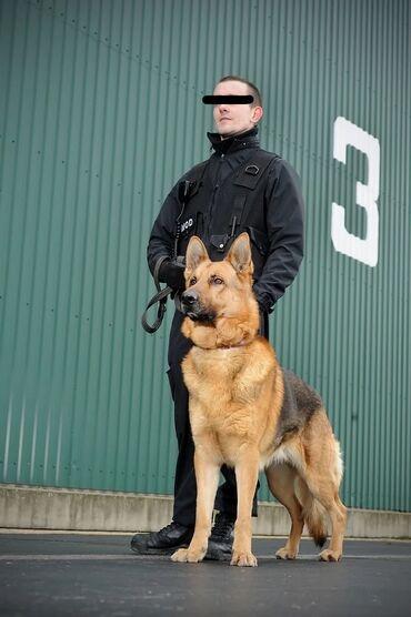 holodilnikov i kondicionerov в Кыргызстан: Требуются сотрудники безопасности с собакой для работы в Чуйской