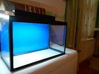Bakı şəhərində Teze akvarium uzunu 40sm hundurluyu 30sm eni 20sm