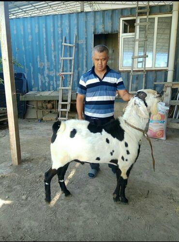 диски bmw 95 стиль в Кыргызстан: Битал, 2,5года,рост 95 см