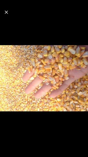Продаю кукуруза рушенная хорошая чистая в мешках тел    в Сокулук