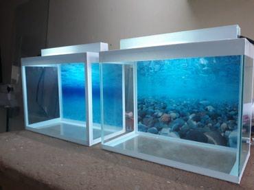 Bakı şəhərində Teze akvarium 24litrelik cemi 18m