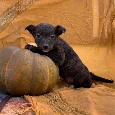 Щенки щенята собака собаки. Фонд По