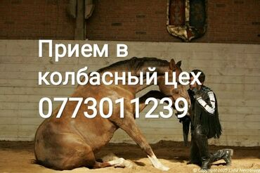 купить участок село байтик в Кыргызстан: Принимаем скот на мясо в колбасный цех. дорого
