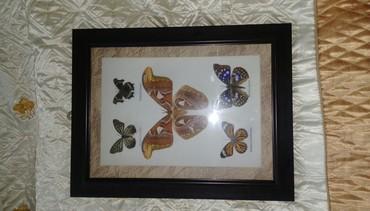 подарок девушке в Азербайджан: Рамки для подарок ( живые бабочки)мумия)