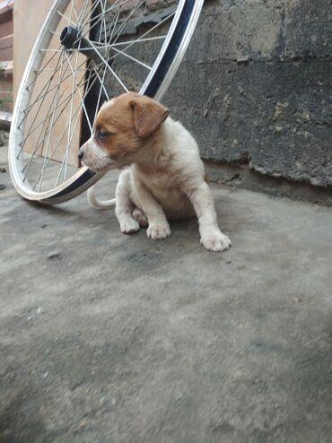 Животные - Маевка: Отдам щенков в добрые руки!