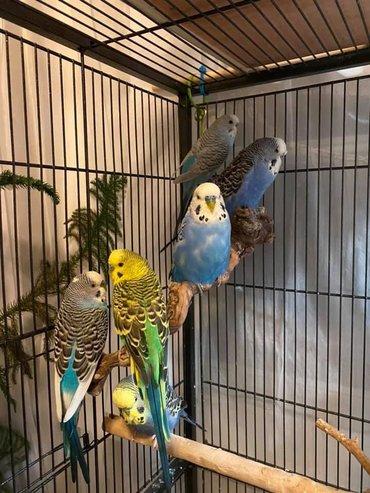 Попугаи разных окрасов и возрастов