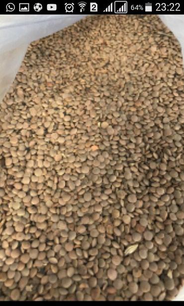 Другие продукты питания - Кыргызстан: УрукСемена Чечевица красная мешки по 50кг. экологически чистая.любой