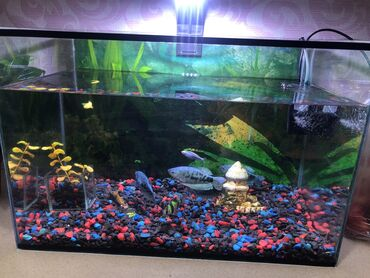 Продаю аквариум с рыбками 50л 9шт разных рыб
