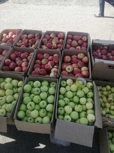 599 объявлений: Свой сад 4 г яблоки оптом и в розницу