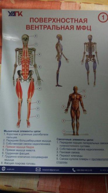 Bakı şəhərində Masaj mualicevi. масаж органов,  мануальная