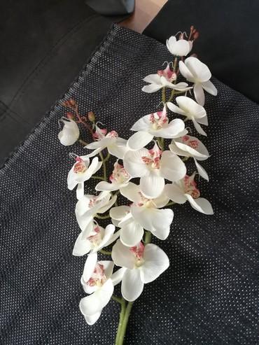 Kućni dekor - Obrenovac: Dve grane vestacke orhideje