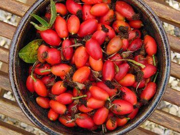 Куплю шиповник плоды,в большом и малом количестве оплата наличными