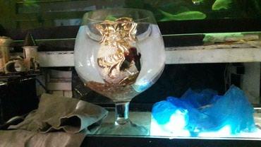 Аквариумы на подарок , с рыбой и в Бишкек