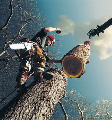 Свалить дерево,спилить дерево,срубить дерево,пилить,напилить