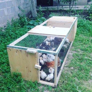 игровой домик для кошки в Кыргызстан: Клетки для кур,цыплят,гусят, перепелок.Брудер (тоок клетка) эстетично