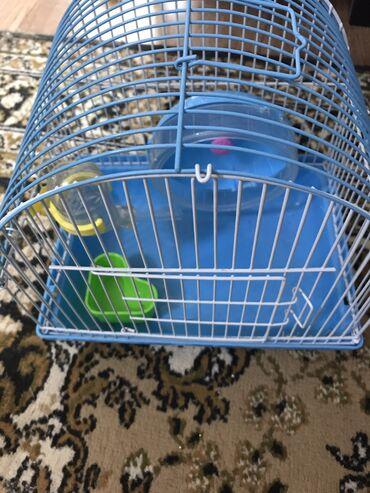 продам опилки в Кыргызстан: Клетка для грызунов (поилка,шар,миска и беговой шарик) Почти не